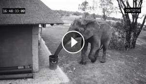 elefante-recoge-basura-play