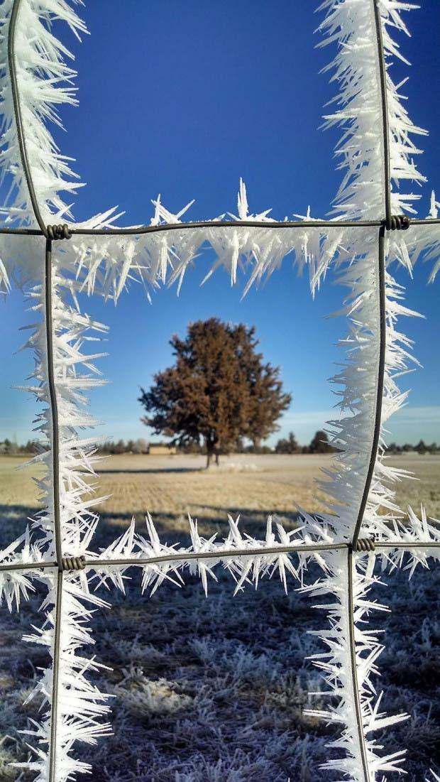 frozen-ice-art-11__880