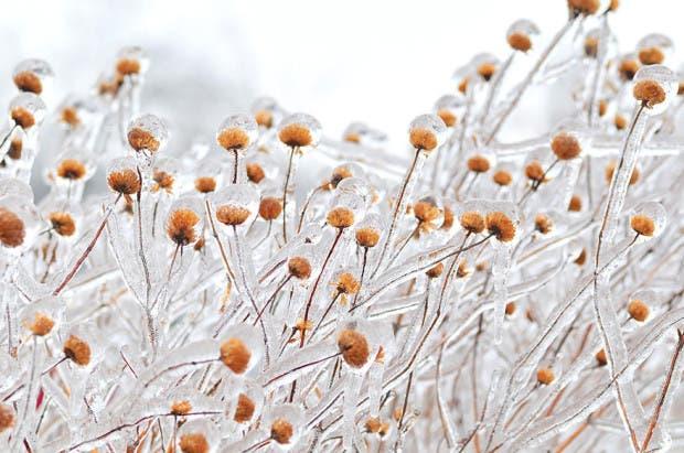 frozen-ice-art-16__880
