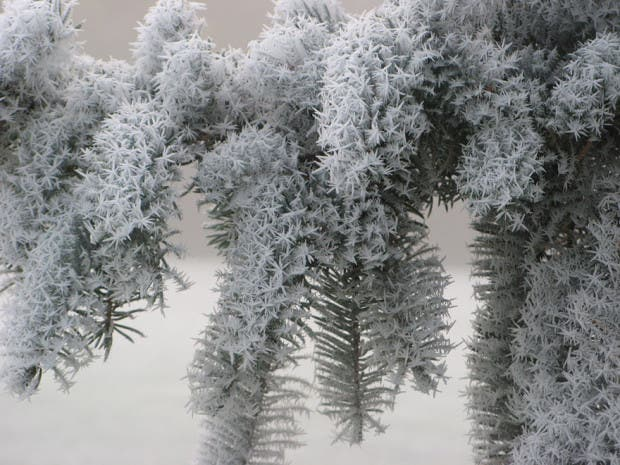 frozen-ice-art-9__880
