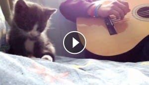 gatito-guitarra-play