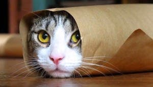 gato-enrollado-papel