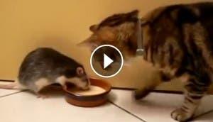 gato-rata-leche-play
