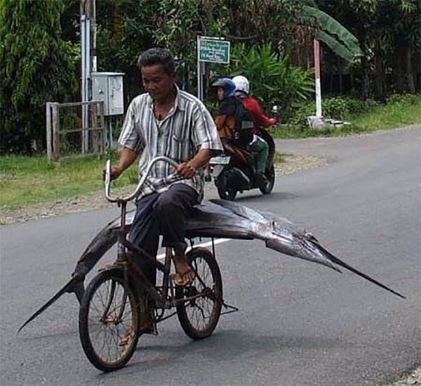 indonesia (17)