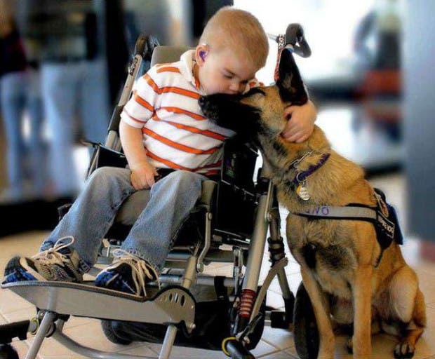 nino silla ruedas perro