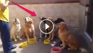 perritos-comiendo-play