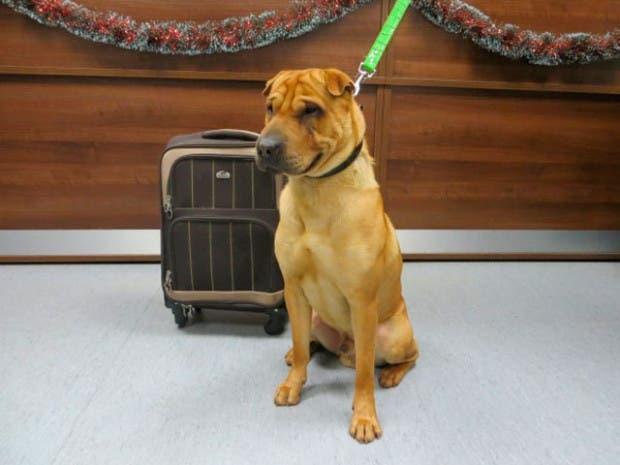 perro abandonado escocia (1)