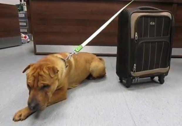 perro abandonado escocia (2)
