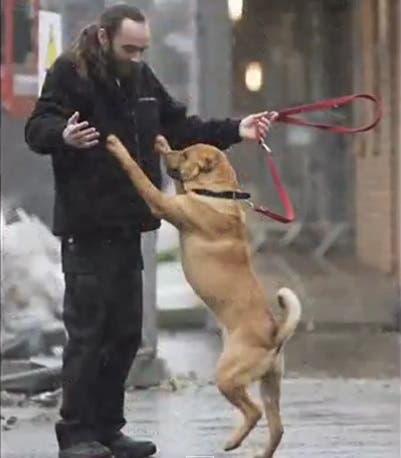 perro abandonado escocia (6)
