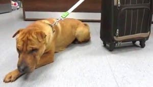 perro-abandonado-estacion