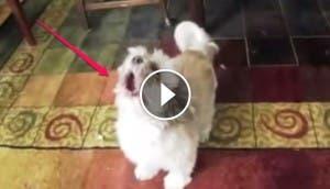 perro-aullido-raro