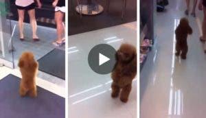 perro-camina-supermercado-play