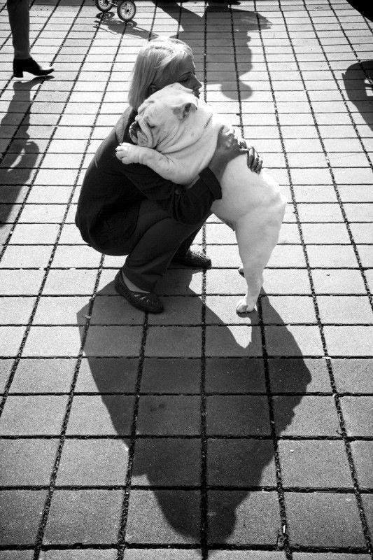 perro mejor amigo (12)