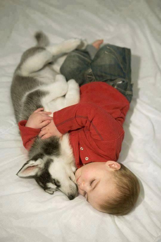 perro mejor amigo (2)