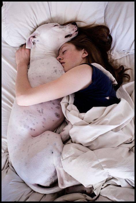 perro mejor amigo (3)