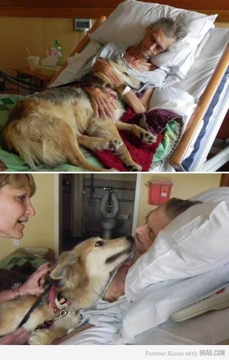perro mejor amigo (4)