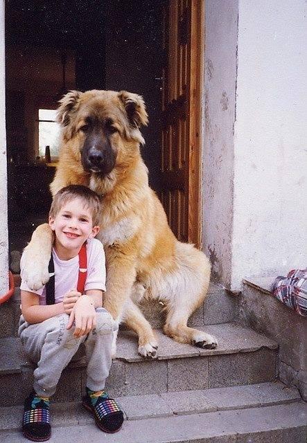 perro mejor amigo (5)