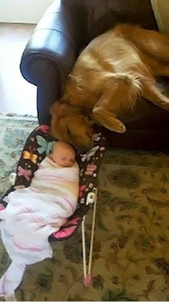 perro-mejor-amigo-6