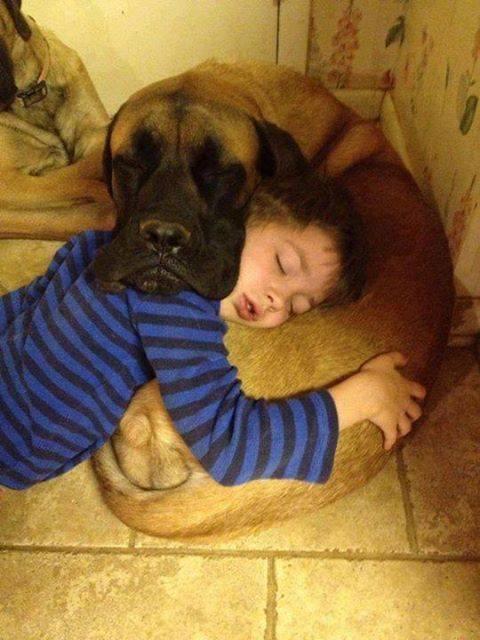perro mejor amigo (7)