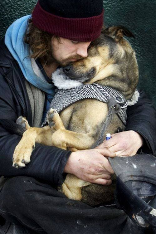 perro mejor amigo (9)