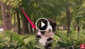 perro-peluche-broma-play