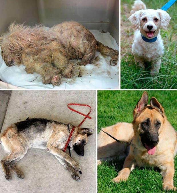perros-antes-y-despues-rescate