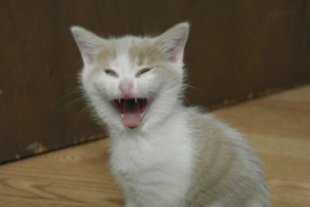 reacciones gatos (1)
