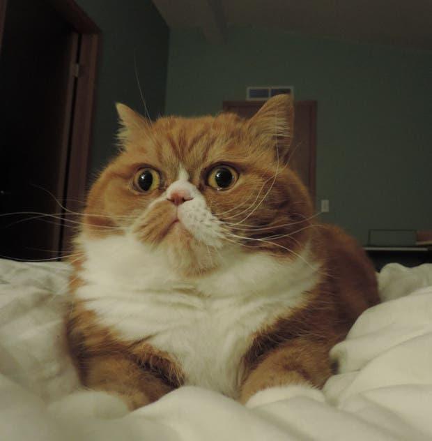 reacciones gatos (12)