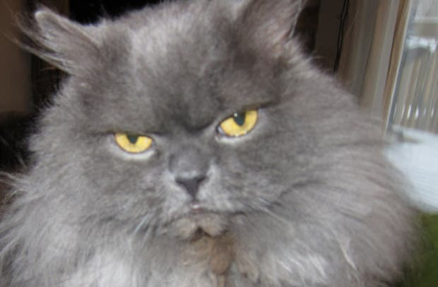reacciones gatos (3)