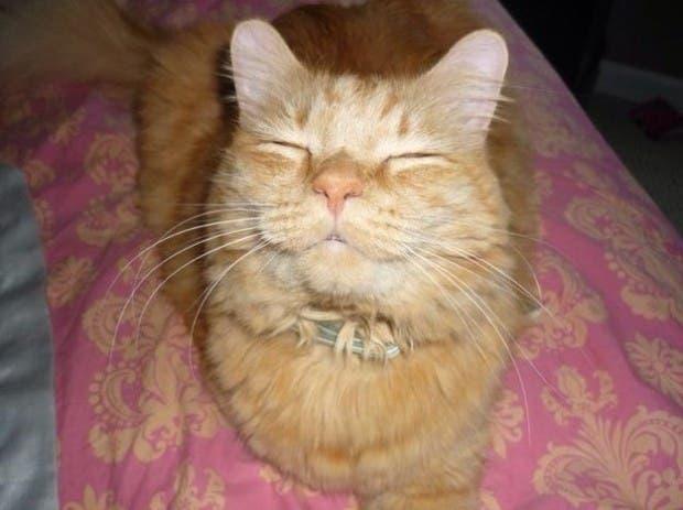 reacciones gatos (4)