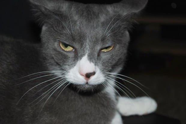 reacciones gatos (8)