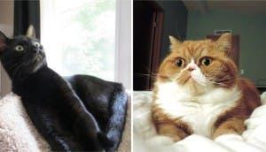 reacciones-gatos-reunion-familiar