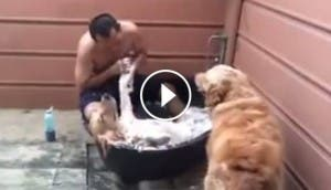spa canino bp