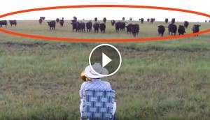 vacas-trombon-play