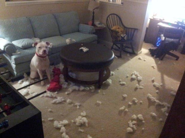 perro sofá