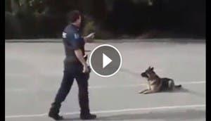 asombroso perro policia bp