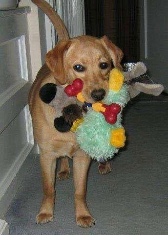 bailey-dog