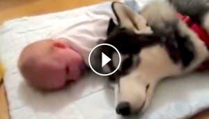 bebe-perro-canta-play
