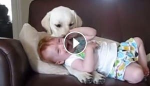 bebe-risas-perro-play