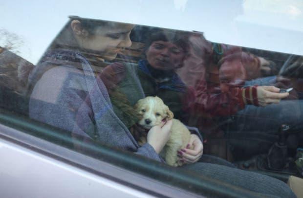 cachorro-adoptado-fotos-crecimiento