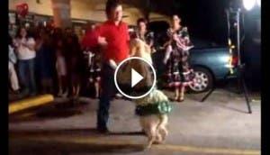 el baile del perrito bp