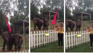 elefantes-violin