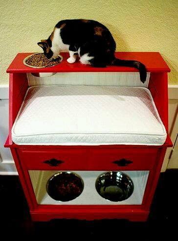 estacioens alimento perro gato (5)