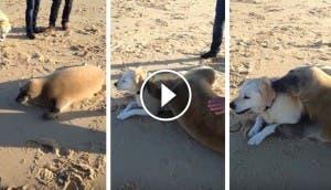 foca-perro-amigo-play