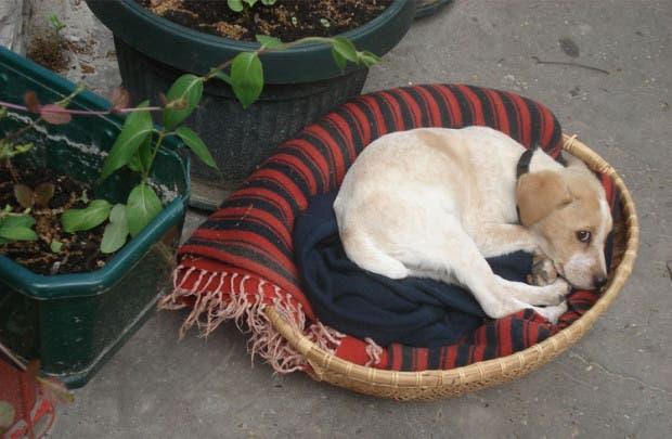 fotos-cachorro-vackor