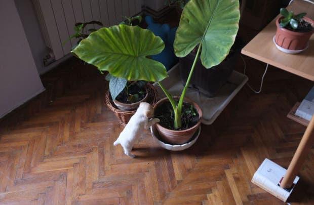 fotos-crecimiento-perro