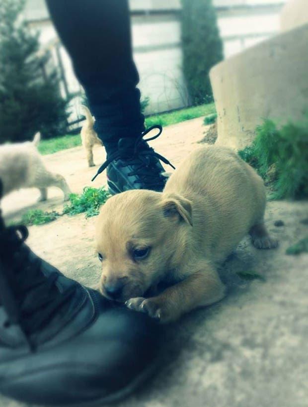 fotos-de-perro-creciendo