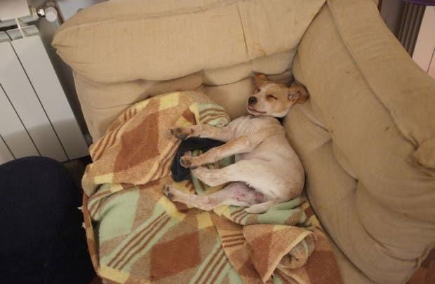 fotos-perro-vackor