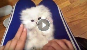gatito-tierno-blanco-sorpresa