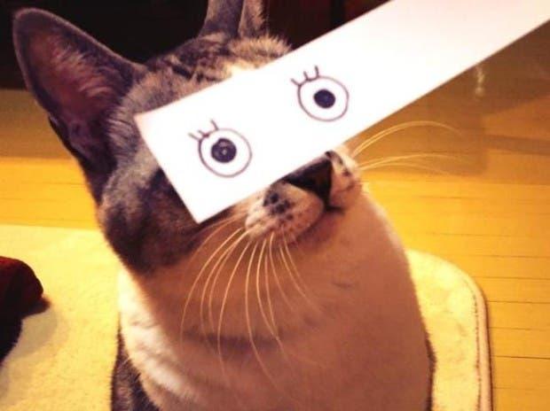 gatos ojos caricatura (1)